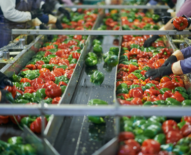food processing temperature monitoring